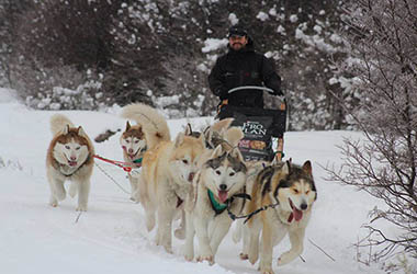 Full Day Nieve con Trineo Huskies